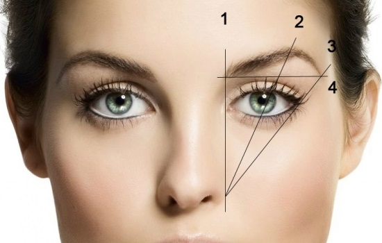 How to take care of eyebrows: tips and tricks
